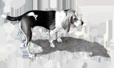 La Farmacia Puerto trabaja con especialidades farmacéuticas de veterinaria.